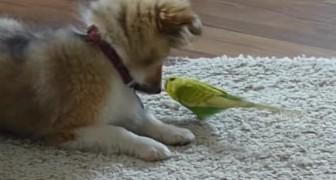 La padrona filma il cane con il pappagallo: quando vede cosa fanno è senza parole!
