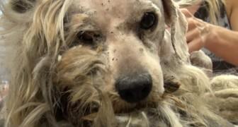 Il a été un chien errant toute sa vie mais attendez de voir comment il devient quand ils prennent soin de lui