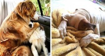 12 expressions d'animaux qui comprennent qu'ils sont chez le vétérinaire