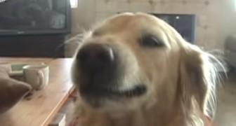 Questo cane esprime la sua felicità diversamente da tutti gli altri cani... Wow!