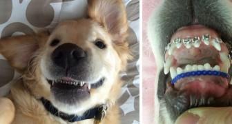 Ha difficoltà nel chiudere la bocca, ma il dentista trova una soluzione... esilarante