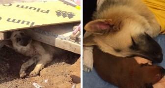 Un cane viene sorpreso da una tempesta: ciò che fa per i suoi cuccioli è speciale