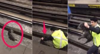 O maquinista para o trem: o motivo faz dele um herói!