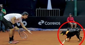Streuner werden auf den Tennisplatz gebracht: Der Grund wird euch zum Lachen bringen