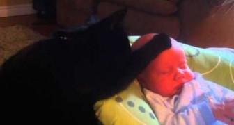 Le chat qui endort le nouveau né
