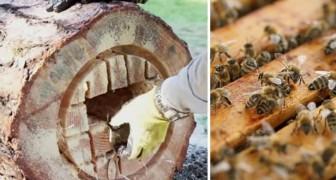 Come trasformare un tronco in un'arnia funzionante per contrastare l'estinzione delle api