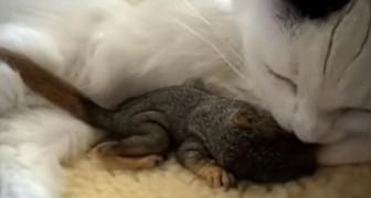 Un gatto si imbatte in uno scoiattolo orfano e sa PERFETTAMENTE cosa fare