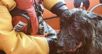 In mare da 5 giorni, lo salvano all'ultimo secondo: ecco la storia del cane miracolato