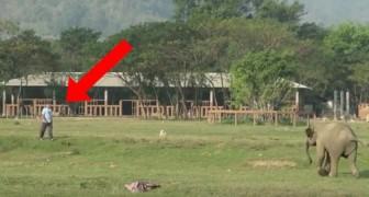 Zo begroet deze olifant elke morgen zijn favoriete verzorger