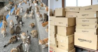 L'île aux chats s'adresse à internet pour demander de la nourriture: la réponse dépasse toutes les attentes!