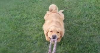 Poche cose al mondo possono farci ridere come i nostri amici cani: guardate qui!