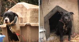 Dopo aver trascorso tutta la loro vita in catene, due cani vengono finalmente liberati