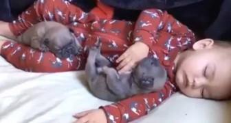 Un neonato schiaccia un pisolino insieme a due cuccioli... Mai visto nulla di più dolce