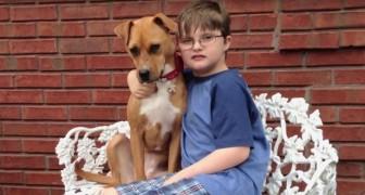 En pitbull adopteras i en familj med en ett autistiskt barn: effekten är överraskande