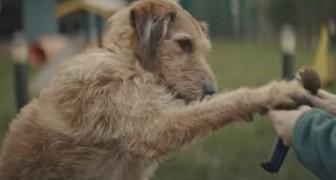 Um cachorro espera o seu amigo de duas patas: a sua história nos faz refletir