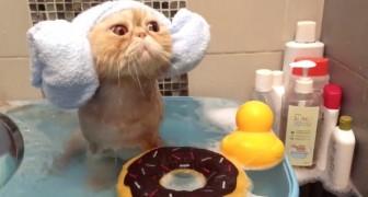 Als je ervan overtuigd bent dat katten water haten, dan zal deze video je van gedachten doen veranderen