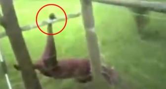 Un agente encuentra un perro atrapado en la red: luego de haberlo liberado sucede algo increible
