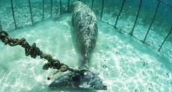 Quelques plongeurs trouvent deux animaux piégés dans des cages sous-marines: vous savez pourquoi?