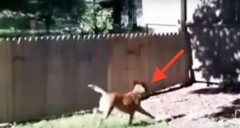 Un uomo costruisce un recinto per il cane, ma guardate cosa avviene poco dopo...