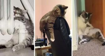 Moi, le chat, je trouve toujours un moyen de dormir où que je sois!
