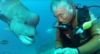Guardate la reazione del pesce quando il suo amico cerca di baciarlo... Wow!