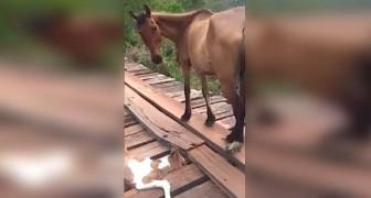 Hij ziet een veulen in nood in de verte: hij bedenkt zich geen twee keer en probeert het dier te redden
