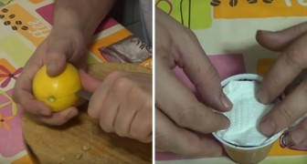 Learn how to plant lemon seeds to grow you own lemon tree!