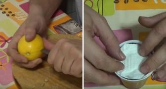 Impara come piantare i semi di limone per far nascere un albero tutto tuo