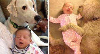 Queste foto dimostrano che ogni neonato dovrebbe crescere insieme ad un cane
