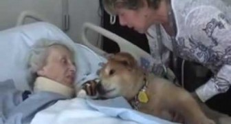 This 19-year-old dog --- has an amazing effect on terminally ill patients!