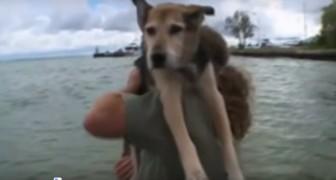 Questo cane soffre di una grave artrite: quello che il padrone fa per lui è commovente