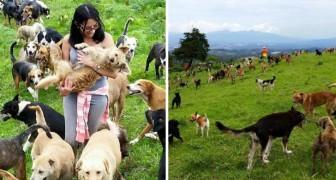 900 cani liberi sulla collina: ecco un canile unico nel suo genere