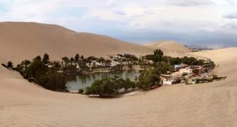 Voici l'une des dernières oasis du désert sud-américain: un paradis aux heures comptées