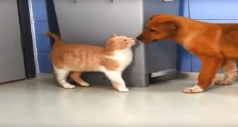 Due gattini salvati dalla strada arrivano in un rifugio. Ecco come li accolgono i cani del posto