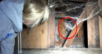 A dog is holed up under a house -- Getting it out will keep you in suspense!