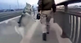 Het lijkt erop dat deze hond de aandacht van zijn baasje wil... maar kijk naar zijn reactie