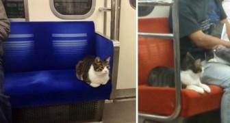 Deze kat neemt regelmatig de metro... ALLEEN. Geloof je het niet? Kijk maar zelf!