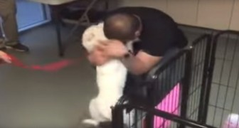 This dog was lost for 22 long days--- Seeing her reunited with her owner will bring tears to your eyes!
