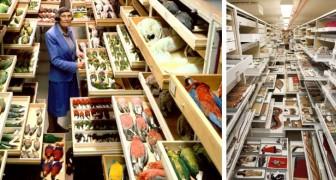 Entriamo nelle stanze segrete del museo più grande del mondo: ecco cosa contengono