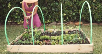 Attach four hula-hoops to a garden box! -- Her idea? A brilliant solution!