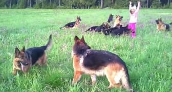Een meisje van 5 en 15 Duitse herders: dat levert onvergetelijke beelden op!