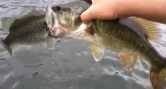 Pescare due pesci per volta? Si Può!