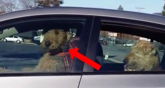 Someone locked their dogs in a car --- Watch the dog in the front!... Wow!
