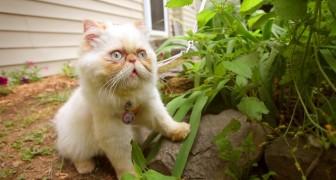 Deze kat wordt nu omringd door liefde: maar dat was een paar maanden terug wel anders