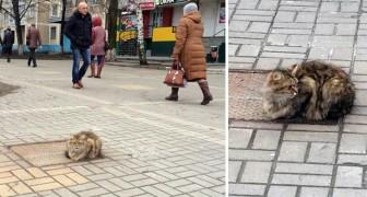 Pendant un an, ce chat a attendu au même endroit ses maîtres qui l'ont abandonné