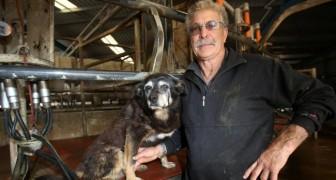 Se ne va il cane più vecchio del mondo: 30 anni di vita spensierata in fattoria