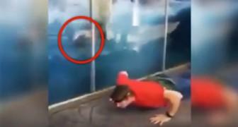 Mannen börja träna på djuparken. Se hur isbjörnen reagerar!