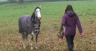 After three weeks a girl returns home and her horse sees her again --- Their reunion is very touching.....