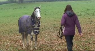 Sie kommt nach drei Wochen nach Hause: Als das Pferd sie sieht, ist die Reaktion berührend