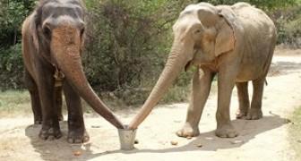 Hanno vissuto insieme 50 anni nell'inferno di un circo: ecco il loro incontro dopo il salvataggio